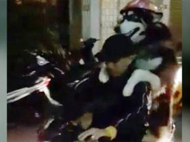 Chó đi xe máy đội mũ bảo hiểm ở Việt Nam lên báo nước ngoài